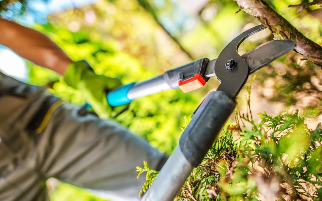 Passa på att rensa upp bland växtligheten under påskhelgen!